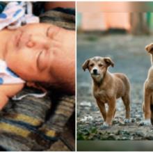 A vida dela estava em perigo depois de ser jogada no lixo, mas esses cães heróis chegaram bem a tempo