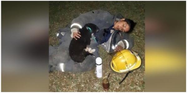 Bombeira esgotada adormece ao lado de cachorrinho que resgatou se incêndio