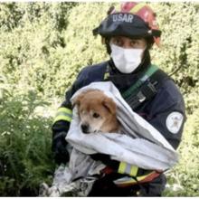 Bombeiro herói salva cãozinho cego que caiu em barranco. Não podia desprezar o choro daquele inocente