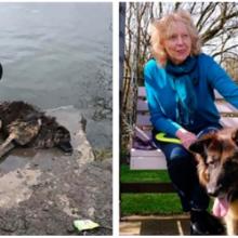 Cachorro amarrado a uma pedra e jogado no rio é resgatado e só quer saber de dar amor