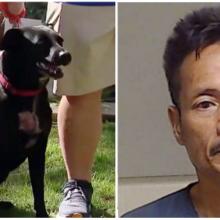Cachorro ataca ladrão armado de faca, persegue-o e salva família de assalto