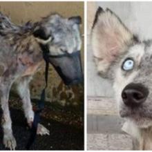 Cachorro esquelético abandonado imploro com um olha que merecia ser salvo