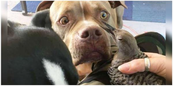 Cachorro julgado como violento, salva pássaro ferido e não sai do seu lado até que fique tudo bem.