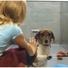Cachorro sofre rejeição contínua por todos em abrigo, até que uma garota para e tudo muda