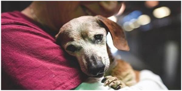 Cadelinha cega de 18 anos abandonada em abrigo se agarra à primeira pessoa que lhe demostra amor