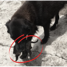 Cão de rua é flagrado salvando filhote que foi abandonado no lixo