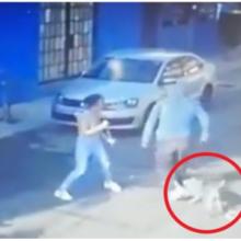 Cãozinho salva seu dono fiel de um assalto violento e é aclamado como um herói
