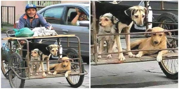 Catador trabalha acompanhado de seus cães para não deixá-los sozinhos nas ruas