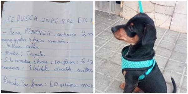 Criança oferece barra de chocolate a quem encontra seu cachorro perdido