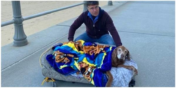 Família constrói cama especial para cãozinho idoso acompanhá-los até a praia