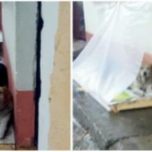 Família improvisa barraca de plástico na calçada para que cães de rua se abriguem da chuva