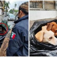 Moradora de rua se recusa a morar em abrigo para não se separar de seus cães