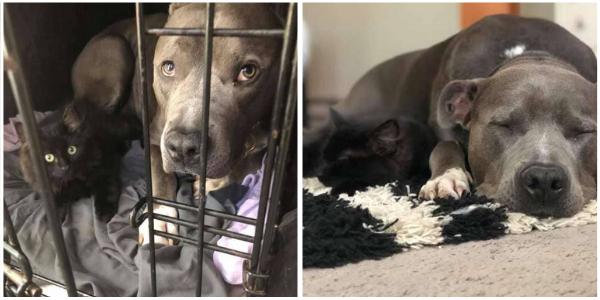 Mulher não consegue dizer não quando seu cachorro resgatado lhe convence a adotar um gatinho de rua.