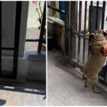 Mulher pede encomendar extras só para que o cachorro possa ver seu entregador favorito