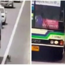 O motorista do ônibus para na rodovia para pegar o cachorro perdido.