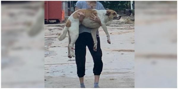 Voluntário carrega o cão de rua que estava ferido em ambas as pernas e resolve adotá-lo.