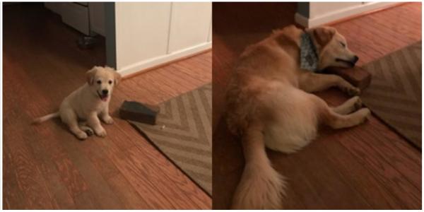 Cachorrinho resgatado vê em um tijolo um amigo para a vida e se torna inseparável dele
