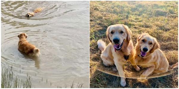 Cachorro ajuda amigo a superar o medo que tinha da água de forma surpreendente