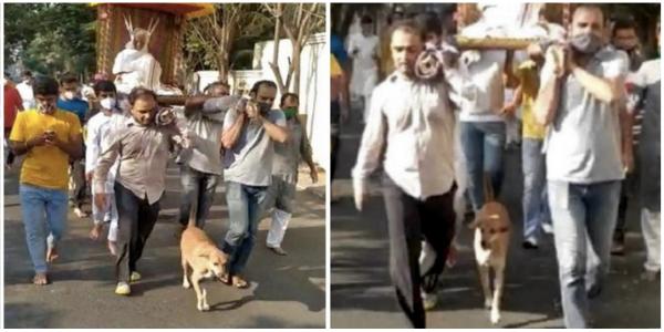 Cachorro caminha 5 km ao lado do caixão de seu falecido dono que havia lhe jurado fidelidade até o fim