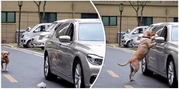 Cachorro observa motorista jogar lixo na rua e lhe dá uma boa lição