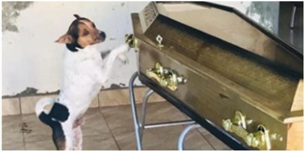 Com dor no coração cãozinho uiva desesperado ao lado do caixão de seu amado dono