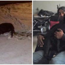 Cão atropelado e deixado para morrer pula nos braços do homem que o salvou