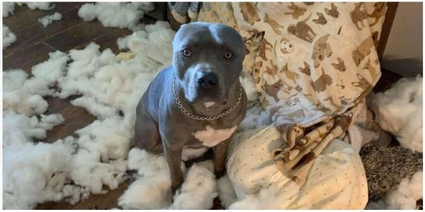 Mulher chega em casa e encontra sua sala de estar coberta com estofamento de sofá