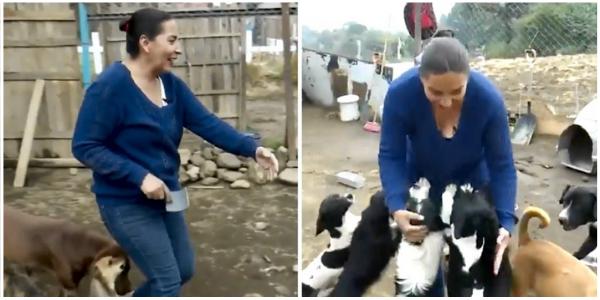 Mulher supera sua depressão resgatando e ajudando mais de 700 cães a encontrar um lar