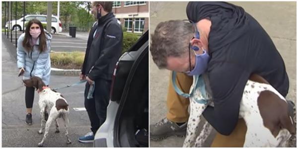 Repórter reconhece cachorro que havia sido sequestrado e faz algo ao-vivo que deixou todos impressionados