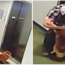 Um Verdadeiro Herói – Homem salva cachorro de acidente mortal em elevador em momento angustiante