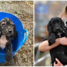 Cachorrinho abandonado dentro de balde é adotado por policial e vira talentoso cão farejador