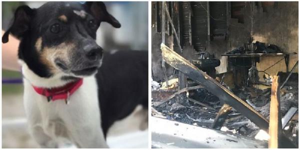 Cachorro herói da a sua vida para salvar toda sua família de grande incêndio