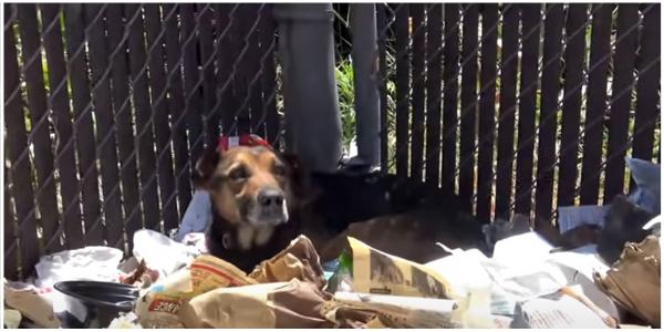 Cachorro que foi abandonado em pilha de lixo é adotado e agora vive feliz