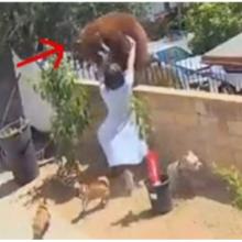 Câmera de segurança registra mulher empurrando urso para defender seus cães de um ataque feroz
