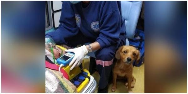 """Depois que seu dono foi atropelado, o cachorro cuidou dele e viajou com ele na ambulância: """"Ela nunca o deixou"""""""