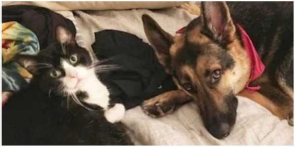 Desde que o estado de saúde do seu cão piorou, o seu gatinho reagiu para protegê-lo