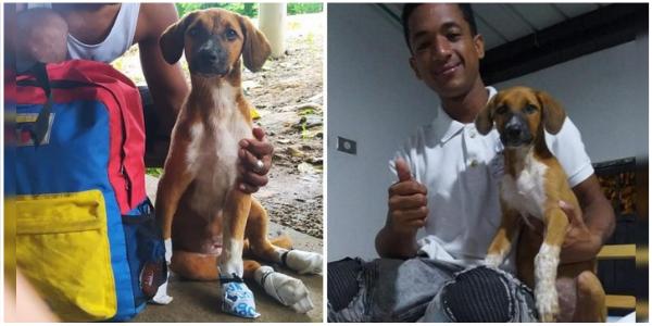 Homem viajou 60 dias a pé acompanhado de seu cachorro. Ele usava sapatos para suas patas feridas
