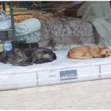 Loja de móveis garante que cães sem-teto tenham um lugar aconchegante para dormir