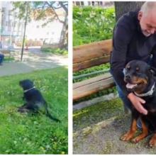 O doce rottweiler conforta um estranho no parque que recentemente perdeu seu cachorro