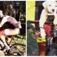 Os ciclistas viram quando alguém jogou um cachorro no meio da estrada e mudam sua vida para sempre
