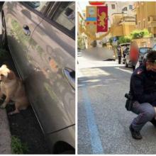 Policial resgata uma cadela abandonada em um poste ao sol na rua e decide adotá-la e dar-lhe uma nova casa