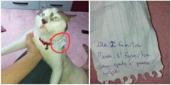 """A família descobre que seu gato está vivendo uma vida dupla """"tomando café da manhã"""" em outra casa todas as manhãs"""