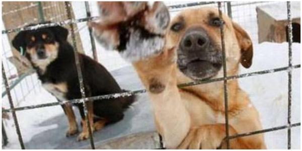 Adotado de um abrigo, cão acorda família e os salva de incêndio