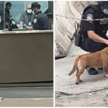 Agente acaricia cachorrinho que cruzou a pé a fronteira entre o México e os Estados Unidos.