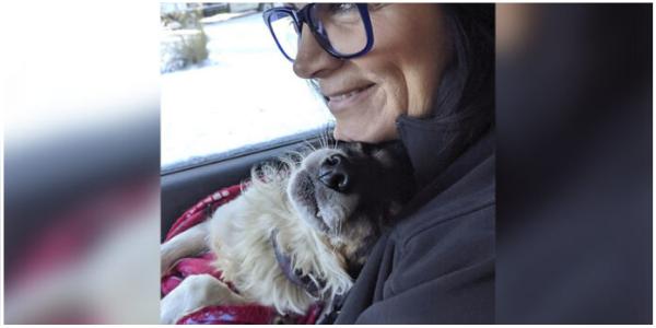 Cachorro acorrentado na neve percebe que finalmente está seguro