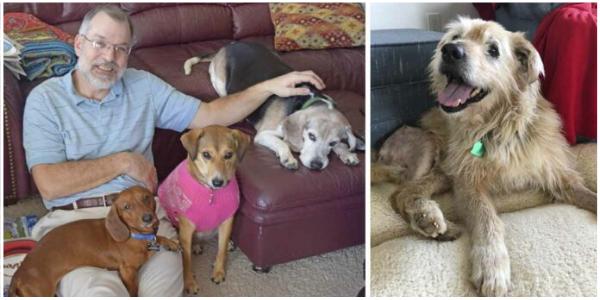 Homem abre asilo para cães que foram abandonados na velhice