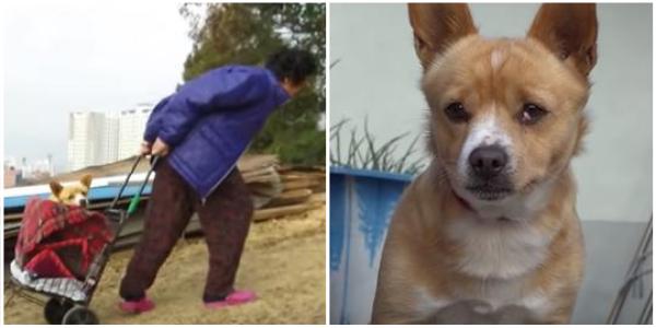 Idosa resgata cachorro paraplégico abandonado em lixão e cuida de suas feridas