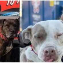 Morador de rua que salvou 16 cachorros de incêndio em abrigo ganha uma casa própria