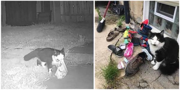 Mulher descobre que seu gato está roubando sapatos na vizinhança