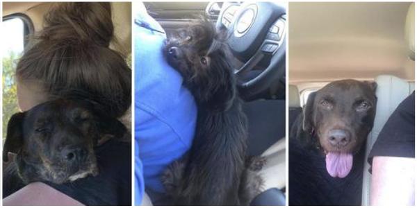 Mulher vai a um abrigo para adotar um cachorro e acaba salvando três